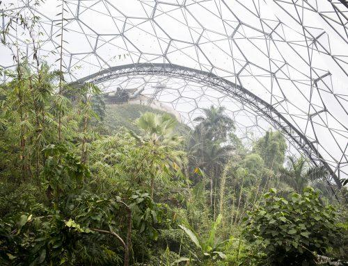 Eden Project, la foresta che cresce sui sogni
